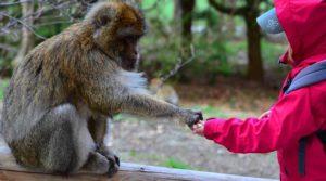 En la imagen aparece un mono acercando su mano a la de un niño, como muestra de confianza, una confianza generada con paciencia, respeto mutuo y empatía, una actitud muy parecida a la que se debe observar en la venta de servicios jurídicos, donde la confianza es la materia prima